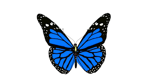 butterfly blue monarch animation loop motion background videoblocks