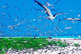 100 bird island belize rental airbnb offers discount on