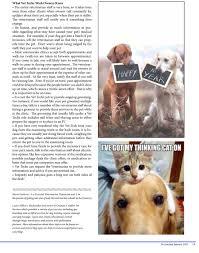 Comfort Pet Certification As Seen In Dog Trainer Jacksonville U2014 Creature Comfort Pet Services