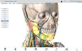 Anatomy The Human Body Buy Human Anatomy Atlas 3d Anatomical Model Of The Human Body