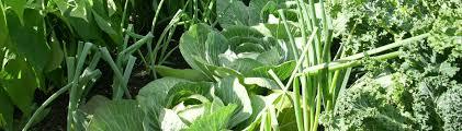 vegetable garden planner garden planning apps growveg com