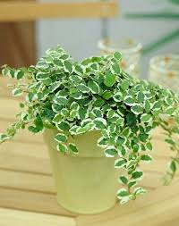 23 Diagrams That Make Gardening by 25 Trending Low Light Plants Ideas On Pinterest Indoor Plants