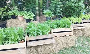 florida senators wade into legal thicket of vegetable garden
