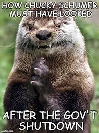 Otter Meme - evil otter memes imgflip