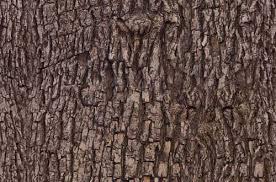 25 free bark textures pixelbell