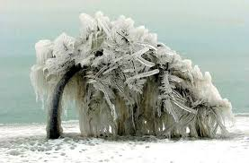 stormhour on iced tree a striking exle of the power