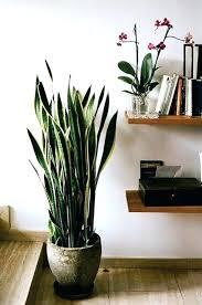 best indoor house plants tall indoor plants daze 5 bathroom ideas tall house plants tall