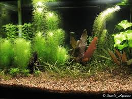 Plants For Aquascaping Need Help With Aquascaping And Plants 174116