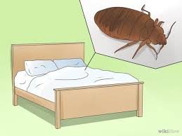 How To Avoid Bed Bugs Best 25 Treatment For Bed Bugs Ideas On Pinterest Bed Bug