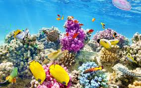 thanksgiving reefs belize s reef system is in imminent danger travel leisure