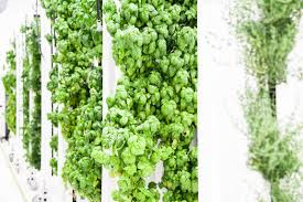9 reasons why vertical farms fail u2013 bright agrotech u2013 medium