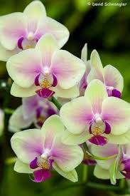 Orchid Flower Pic - best 25 orchids ideas on pinterest orchid care growing orchids