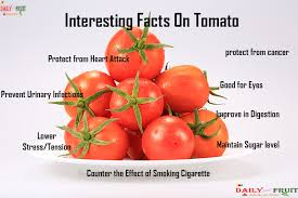 interesting facts on tomato dailyonefruit