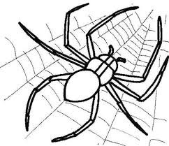 spider spider coloring cute spider