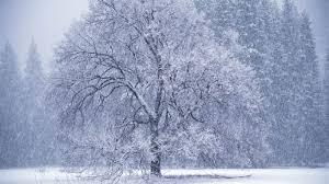 snowy wallpaper scenes 52dazhew gallery