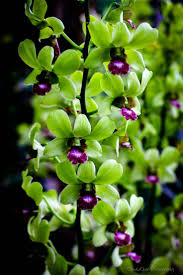 2365 best orkide images on pinterest plants flowers and orchid