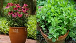 native american medicinal plants top 15 most powerful medicinal plants youtube