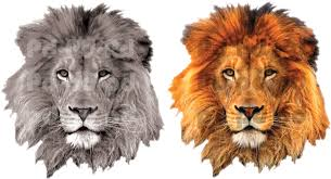 lion wall decal african wall decal murals primedecals addthis sharing sidebar