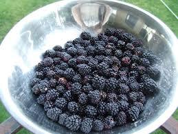 backyard renaissance with caleb warnock baking blackberry jam