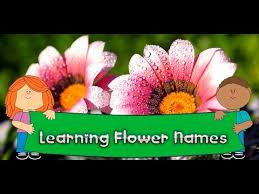 Identify Flowers - flower names colors features android apps on google play