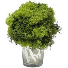 Laurel Topiary - bougainvillea preserved reindeer moss topiary u0026 reviews wayfair