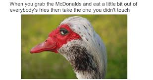 Meme Duck - 34 sly duck memes too smooth for your own good