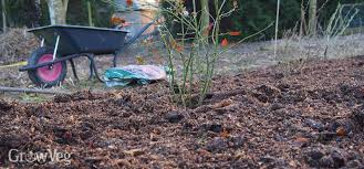 Best Type Of Mulch For Vegetable Garden - using grass clippings as vegetable garden mulch