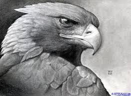 drawn eagle realistic pencil and in color drawn eagle realistic
