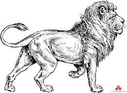 lion drawing design free clipart design download