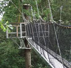 Treetop Canopy Tours by Oxbow Meadows Things To Do In Columbus Ga Visit Columbus Ga