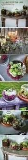 67 best terrariums images on pinterest gardening terrariums and