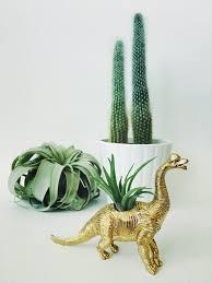 small gold brachiosaurus dinosaur planter air plant u2013 two trees