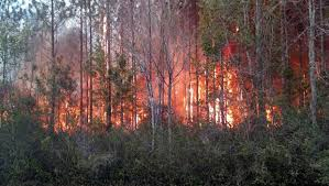 Wildfire Car For Sale by 5 Things To Know About The Nassau County Wildfire Jacksonville