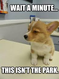 Dog At Vet Meme - dogs that just realized they re going to the vet the brunson