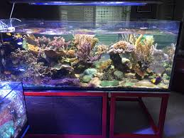 reef tank lighting schedule following the masters part two reef2reef saltwater and reef