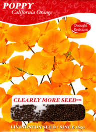 poppies flowers how to grow poppy perennial flowers growing poppies buy poppy
