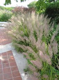myers landscape nursery ornamental grasses