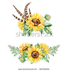 sunflower stock images royalty free images u0026 vectors shutterstock
