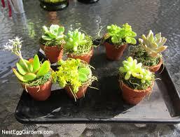tiny succulent pots nest egg gardens