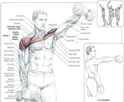 Front Of The Shoulder - 253 best shoulders images on arm workouts workout