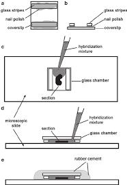 th e chambre b preparation and usage of hybridization glass chambers a b