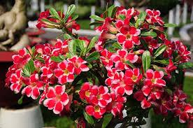 Fertilizer For Flowering Shrubs - flowering shrubs the lovely plants