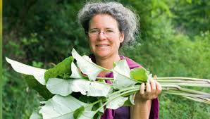 cuisiner les herbes sauvages recettes de cuisine aux plantes sauvages