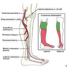 Ankle Anatomy Ligaments A Diagram Of The Ankle Of Human Body Human Anatomy Chart
