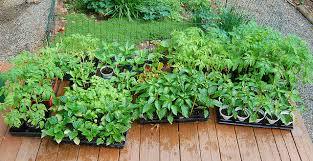 green business ideas food plant nursery