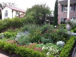 Texas Landscape Plants by 11 Best Texas Native Yardscape Images On Pinterest Texas