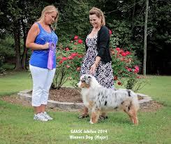australian shepherd 2015 nationals myles
