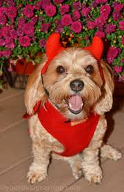 designer halloween costumes halloween costume cuteness yourdesignerdog