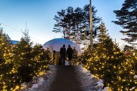 christmas lights high strung loner