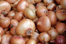 onions planting growing and harvesting onion plants the old